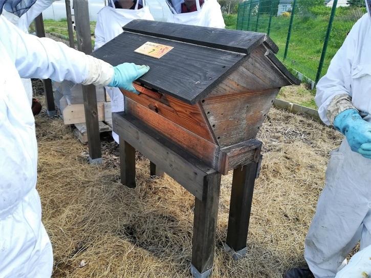 La ruche kenyane