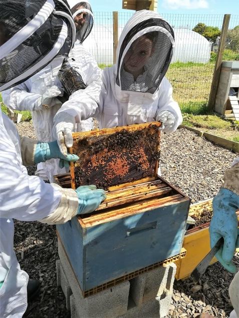 transfert de ruche
