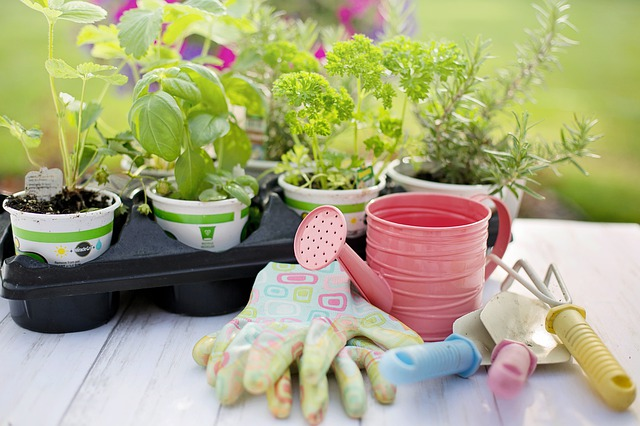planting-4226838_640.jpg